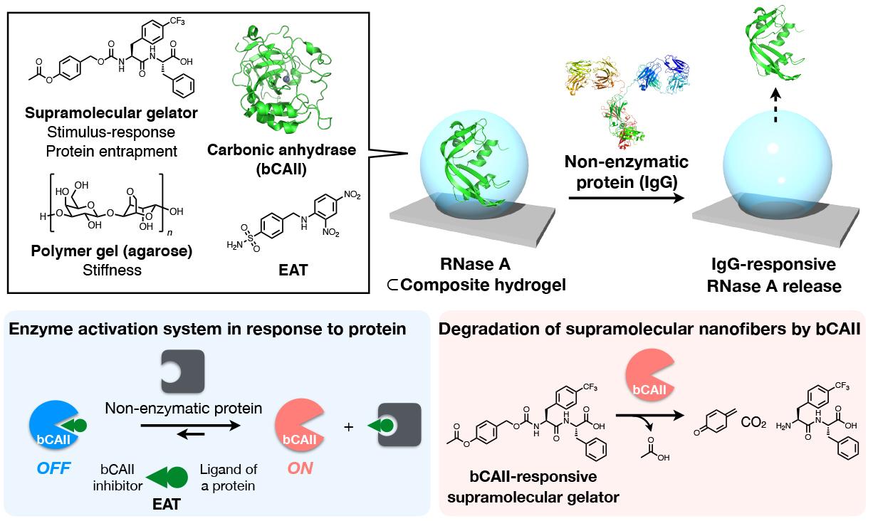 Protein-Responsive.jpg
